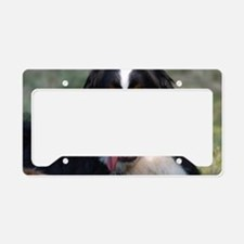 Adorable Bernese Mountain Dog License Plate Holder