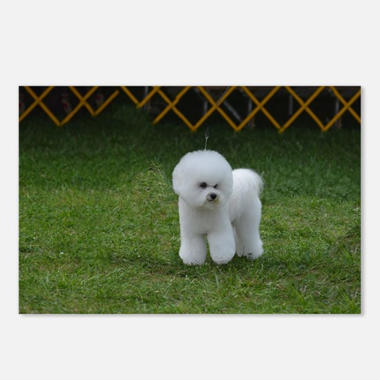 Cute White Bichon Frise Postcards (Package of 8)