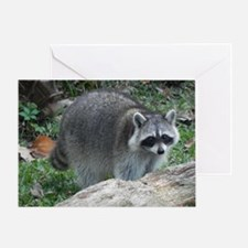 Fluffy Racoon Greeting Card
