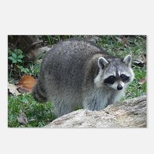 Fluffy Racoon Postcards (Package of 8)