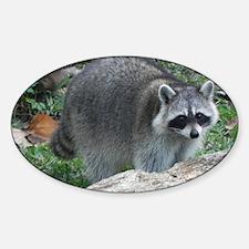 Fluffy Racoon Sticker (Oval)