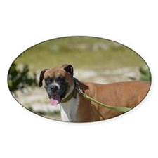 Cute Boxer Dog Decal