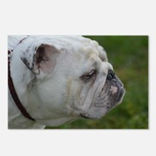 Face of a Smug Bulldog Postcards (Package of 8)