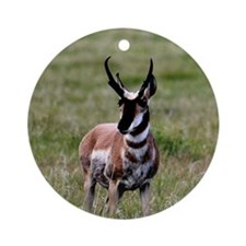 Pronghorn by in Meadow Round Ornament