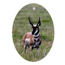 Pronghorn by in Meadow Oval Ornament