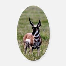 Pronghorn by in Meadow Oval Car Magnet