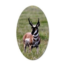 Pronghorn by in Meadow 35x21 Oval Wall Decal
