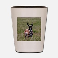 Pronghorn by in Meadow Shot Glass