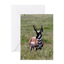 Pronghorn by in Meadow Greeting Card