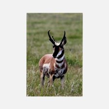 Pronghorn by in Meadow Rectangle Magnet