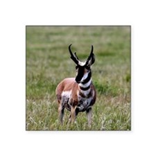 """Pronghorn by in Meadow Square Sticker 3"""" x 3"""""""