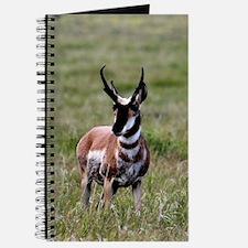 Pronghorn by in Meadow Journal