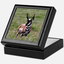 Pronghorn by in Meadow Keepsake Box