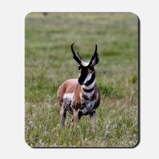 Pronghorn by in Meadow Mousepad