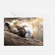 Sleeping Puma Greeting Cards