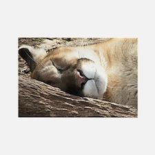 Sleeping Puma Magnets
