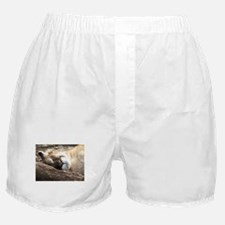 Sleeping Puma Boxer Shorts