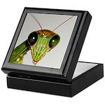 Preying Mantis Eyes Keepsake Box
