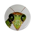 Preying Mantis Eyes 3.5