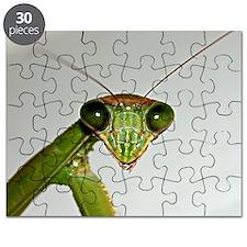 Praying Mantis Puzzle
