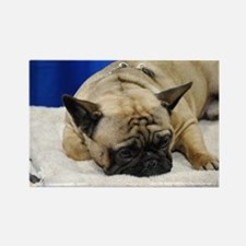 Sleeping French Bulldog Rectangle Magnet