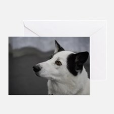 Black and White Canaan Dog Greeting Card