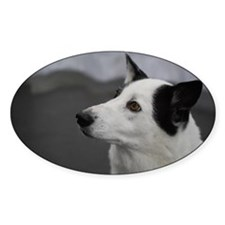 Black and White Canaan Dog Decal