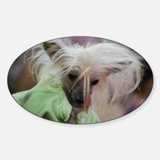 Chinese Crested Dog with Tongue Out Decal