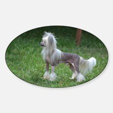 Small Chinese Crested Dog Decal