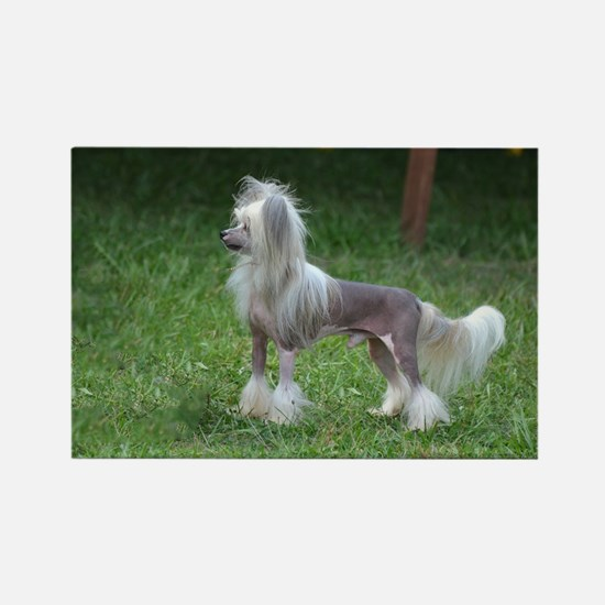 Small Chinese Crested Dog Rectangle Magnet