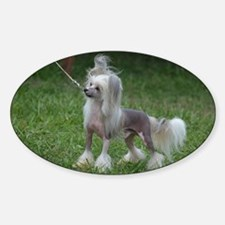Alert Chinese Crested Dog Sticker (Oval)