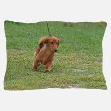 Dachshund Puppy Pillow Case