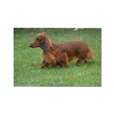 Sleek Long Haired Dachshund Rectangle Magnet