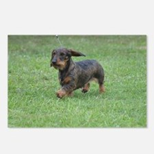 Cute Wire Haired Dachshun Postcards (Package of 8)