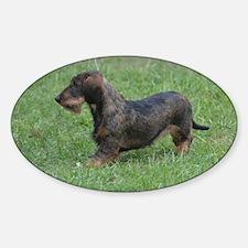 Black Wire Haired Dachshund Dog Sticker (Oval)