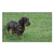 Adorable Wire Hair Dachshund Decal