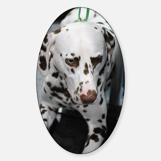 Sweet Brown and White Dalmatian Sticker (Oval)