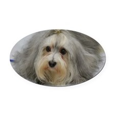 Adorable Havanese Dog Oval Car Magnet