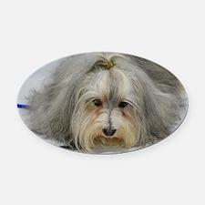 Pet Havanese Dog Oval Car Magnet