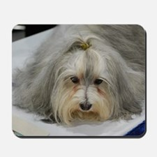 Pet Havanese Dog Mousepad
