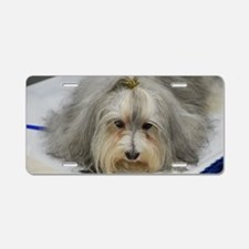 Pet Havanese Dog Aluminum License Plate