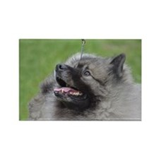 Fluffy Keeshond Rectangle Magnet