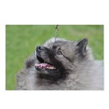 Fluffy Keeshond Postcards (Package of 8)