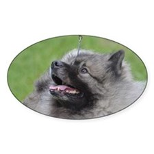 Fluffy Keeshond Decal