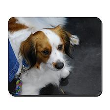 Kooikerhondje Dog Mousepad
