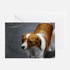 Adorable Kooikerhondje Dog Greeting Card