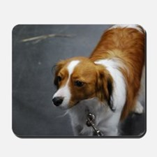 Adorable Kooikerhondje Dog Mousepad