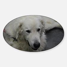 Kuvasz Dog Decal