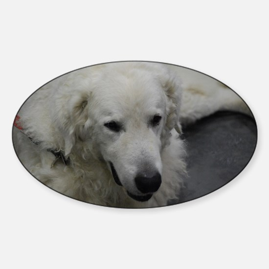 Kuvasz Dog Sticker (Oval)