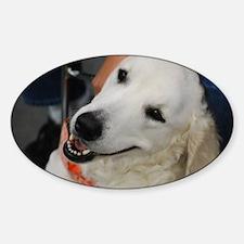 Adorable Kuvasz Dog Decal